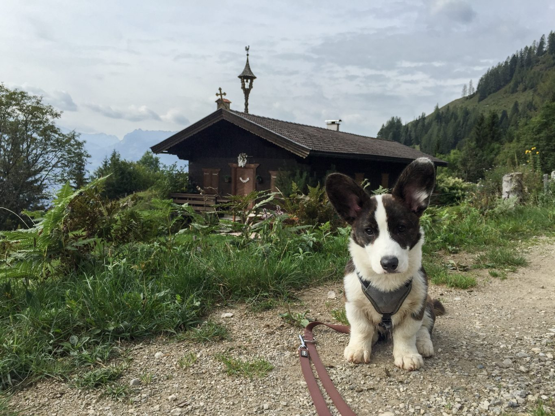 alpen-herbsturlaub-kaiserwinkl-tirol-tirol-im-herbst-wanderlust-wanderurlaubimg_9545